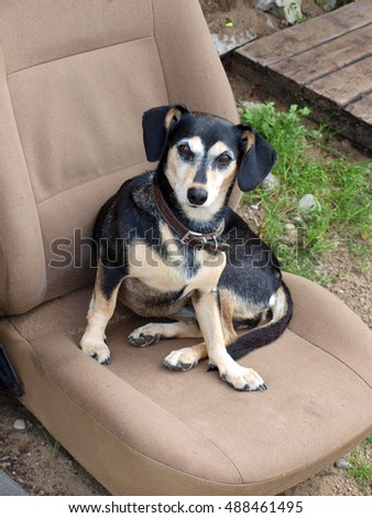 Small black dog sitting outdoor on old car seat.