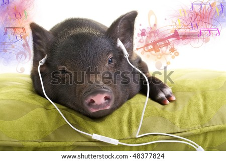 Small black pig lying down on a green pillow and listening to music through white headphones and music coming out of his ears. - stock photo
