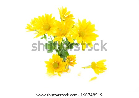 small bouquet of yellow flowers on a white background - stock photo