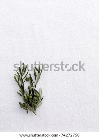 small branch of an olive tree on a white towel, - stock photo
