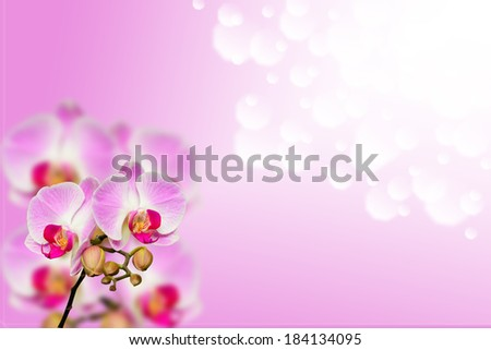 Small branch of gentle orchids on gradient bokeh background with free place for your text - stock photo
