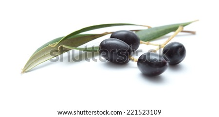 small branches with ripening olives isolated on white background