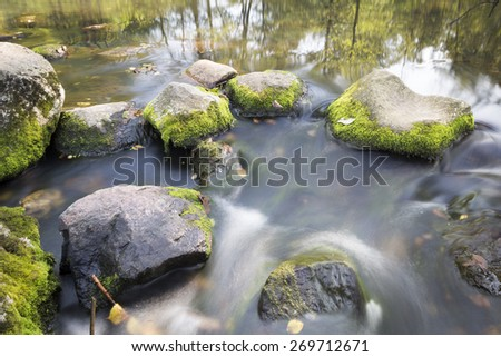 Small brok in the green forest - stock photo