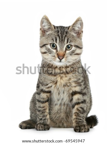 Small brown kitten sitting on a white background