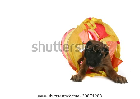 small brown puppy crawling through a yellow tunnel - stock photo