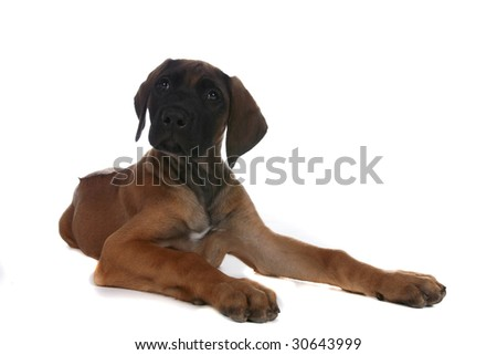 small brown puppy with its head turned as if interested - stock photo