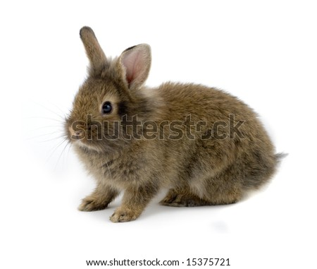 Small brown rabbit isolated on white - stock photo