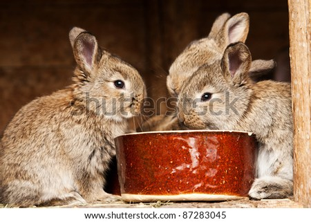 small brown rabbits with food - stock photo