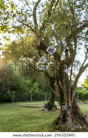 Small Bubbles Against Blurry Old Green Trees at the Park on a Sunny Day. - stock photo