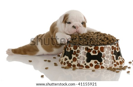 small bulldog puppy laying beside large bowl of dog food - stock photo