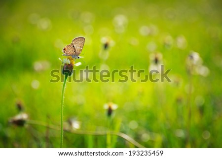 small butterfly on green grass field with flowers - stock photo
