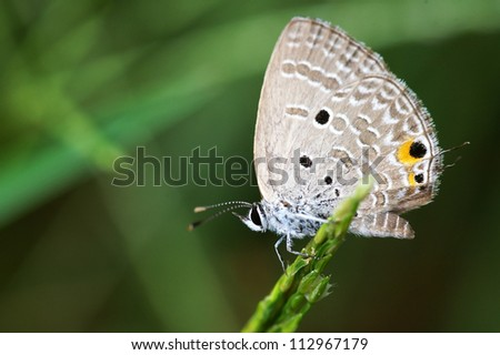 Small butterfly on the grass