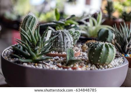 Small Cactus Garden.