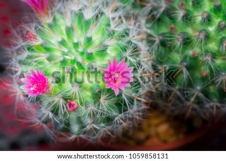 Small cactus have pink flower blooming stock photo royalty free small cactus have pink flower blooming and small stone for ground on the morning mightylinksfo Images