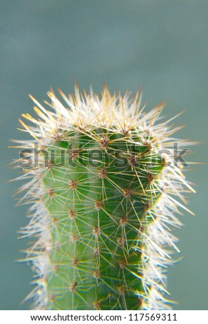 Small cactus on a green background