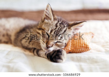Small Cat - stock photo