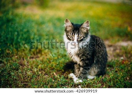 Small Cat Kitten Sit In Green Summer Grass.