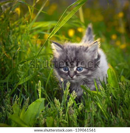 Small cat on a grass - stock photo