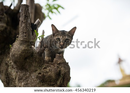 small cat on a tree