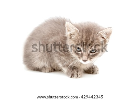 small cat on a white background