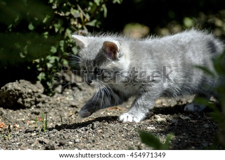 small cat on the prowl in nature