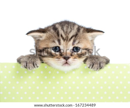 small cat or kitten in cardboard box isolated - stock photo