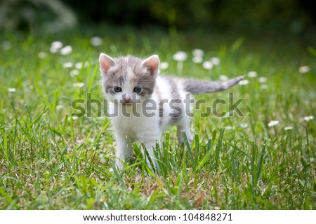 small cat outdoor in nature - stock photo