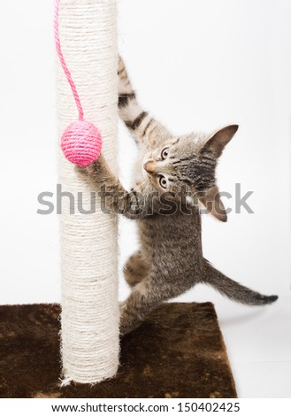 Small cat playing with a pink ball and isolated on white background - stock photo