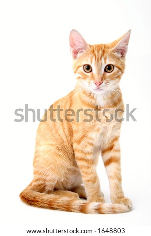 small cat portrait on white background - stock photo