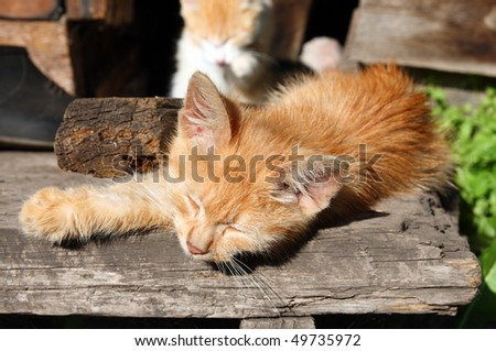 small cat sleeping on wooden porch in garden