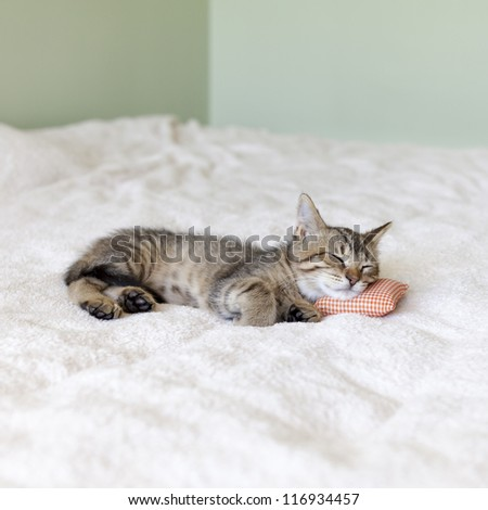 Small Cat With Pillow