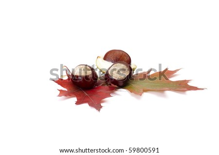 Small chestnuts and leaves isolated on a white background. - stock photo