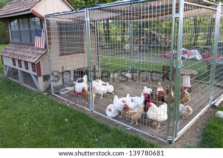 Small chicken coop and fenced area for egg laying fowl - stock photo