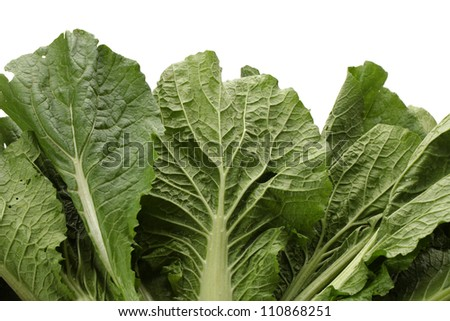 Small Chinese cabbage on white background - stock photo