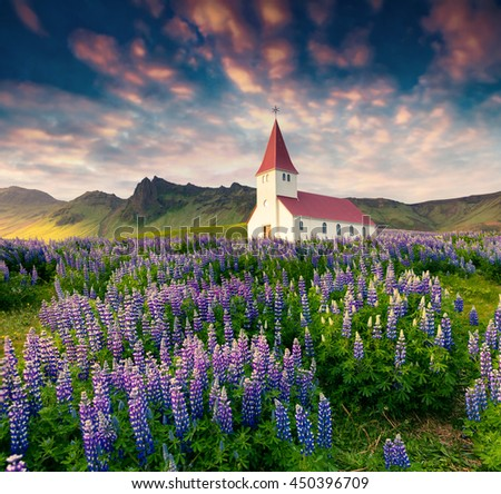 Small church surrounded blooming lupin flowers in the Vik village. Colorful summer sunrise in the Iceland, Europe. Artistic style post processed photo. - stock photo