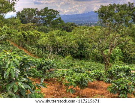 Small coffee plantation on a hillside in Costa Rica. - stock photo