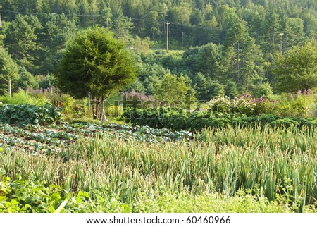 Small community garden with vegetables and flowers and tree.  There is a small stone garden buddha sitting under the tree. - stock photo