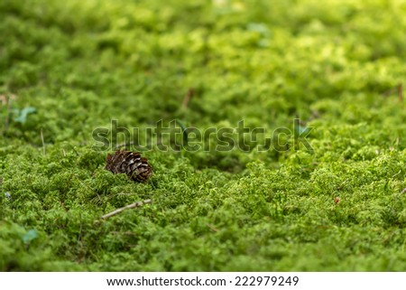 small Cones are among the green moss - stock photo