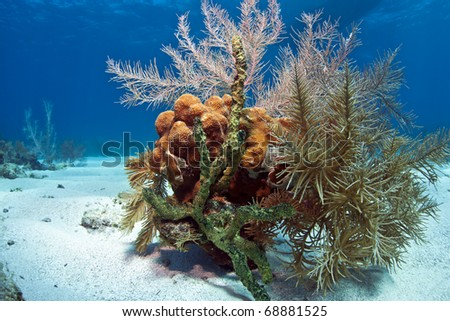 Small coral garden in the sand with sponges