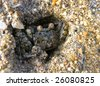 Small crab - stock photo