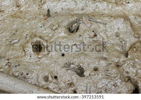 Small crabs on mud at mangrove forest - stock photo