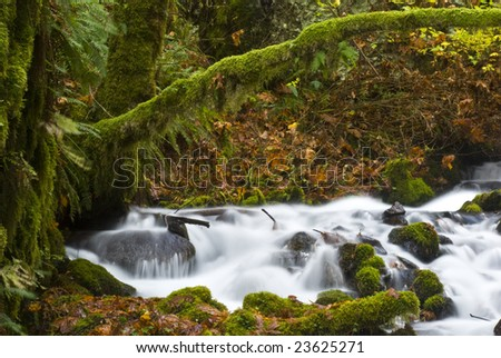 Small creek, Columbia River Gorge, Oregon