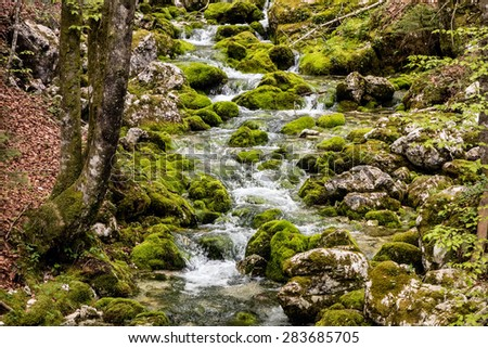 Small creek in a deep Slovenian forest - stock photo