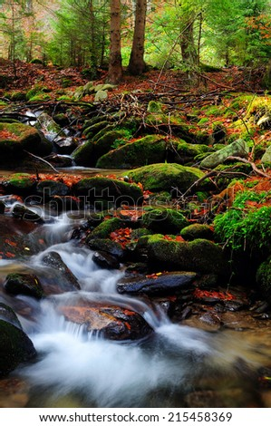 Small creek in the autumn forest