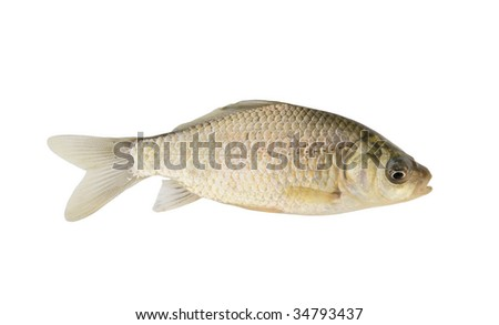 Small crucian isolated
