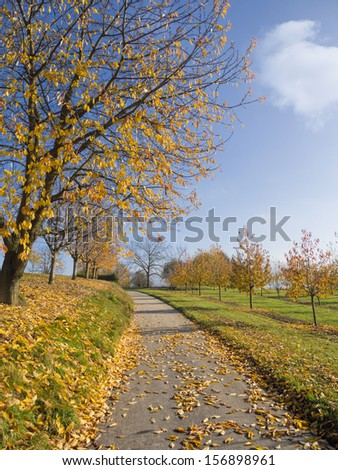Small curved road through idyllic autumn landscape. Fallen leaves covering the grounds, green grass and refreshing blue sky.  - stock photo