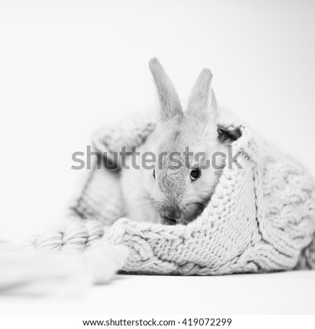 Small cute bunny hiding in big knitted hat with homogenous white background, black and white image - stock photo