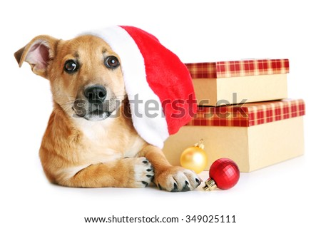Small cute funny dog in Santa hat with boxes and Christmas toys, isolated on white - stock photo