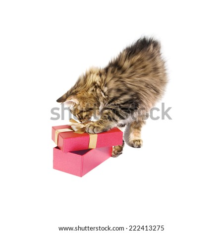 small cute kitten about gift box. isolated - stock photo