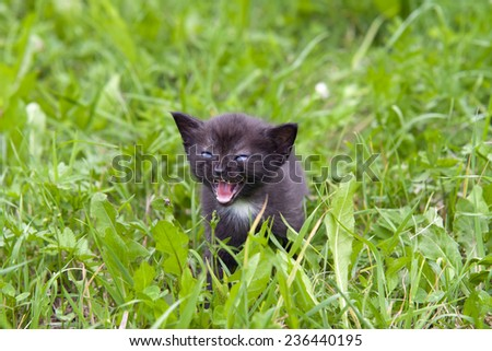 Small cute kitten in the grass  -expression - stock photo
